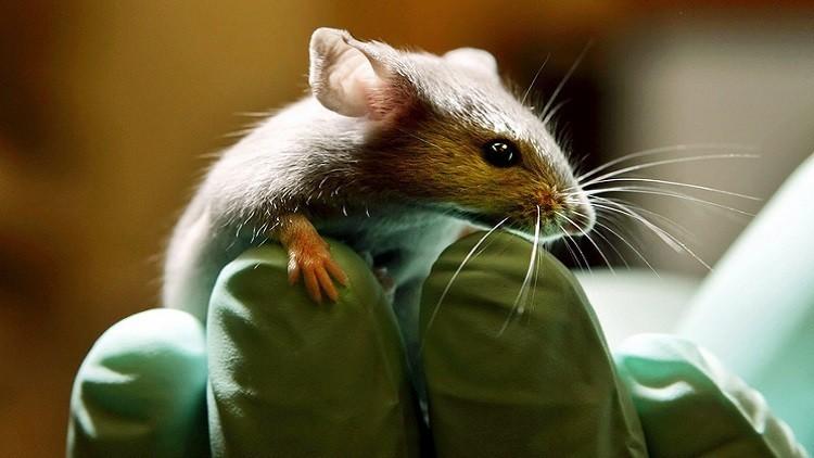 تجربة تجميد الفئران في الفضاء