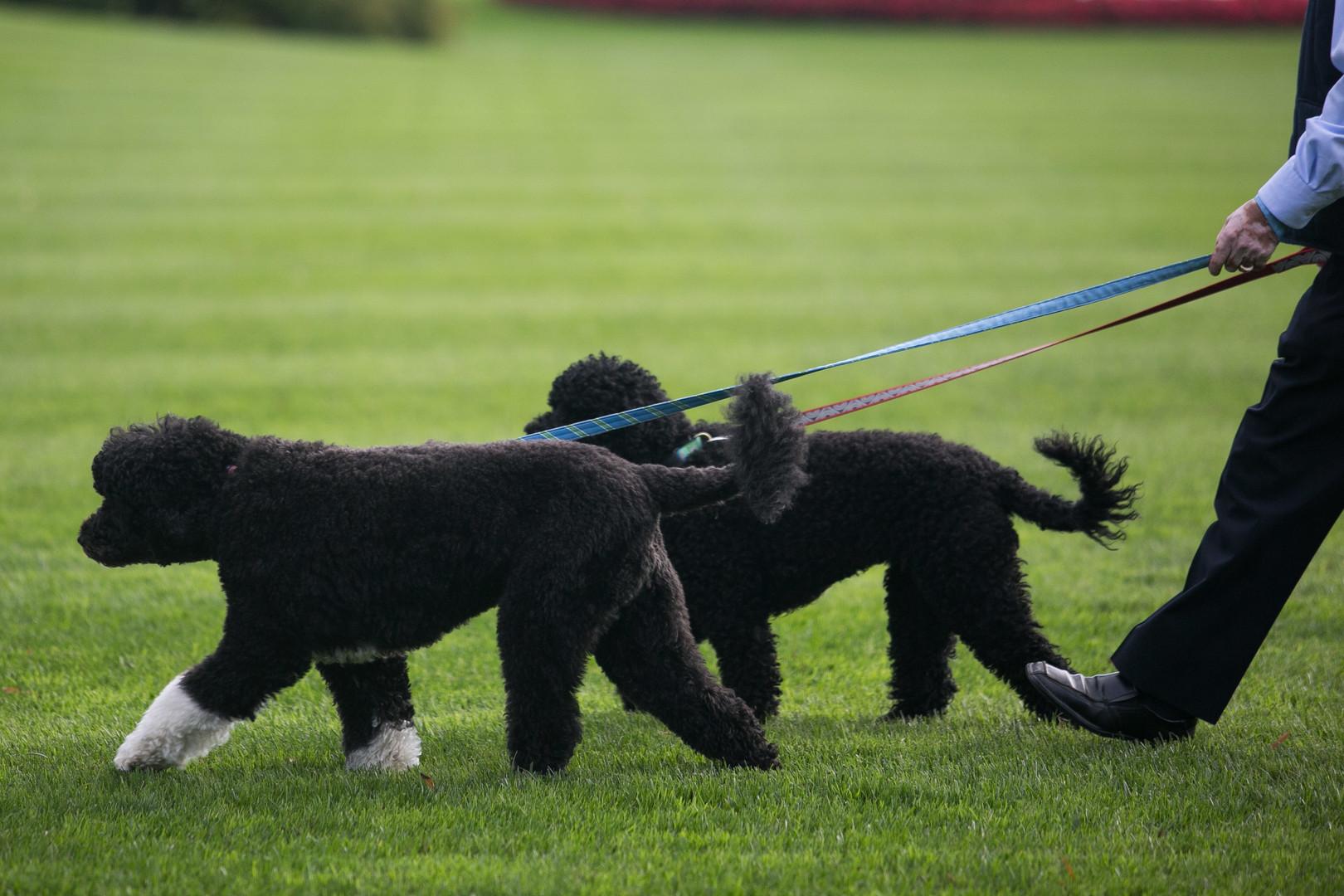 بالصور.. كلب أوباما يعض فتاة استضافها الرئيس بالبيت الأبيض في وجهها