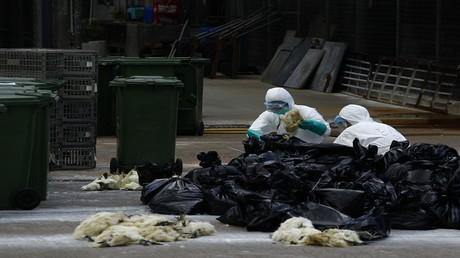 إعدام 800 ألف طائر في فرنسا