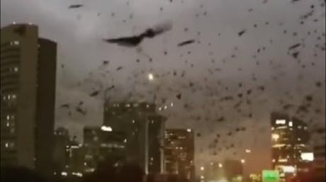 آلاف الطيور السوداء تغزو مدينة هيوستن الأمريكية