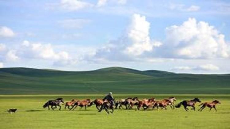 الخيول المنغولية لسداد المديونية