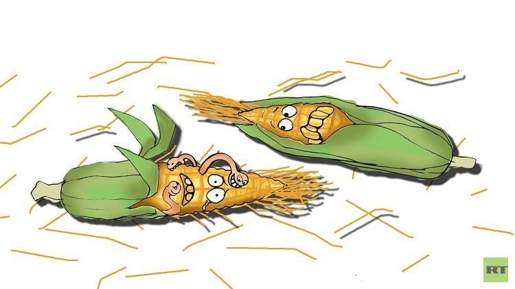 خبراء يحذرون من اختفاء الذرة!