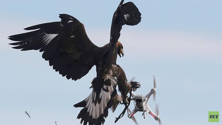 مستشارون فرنسيون يصطادون طائرات