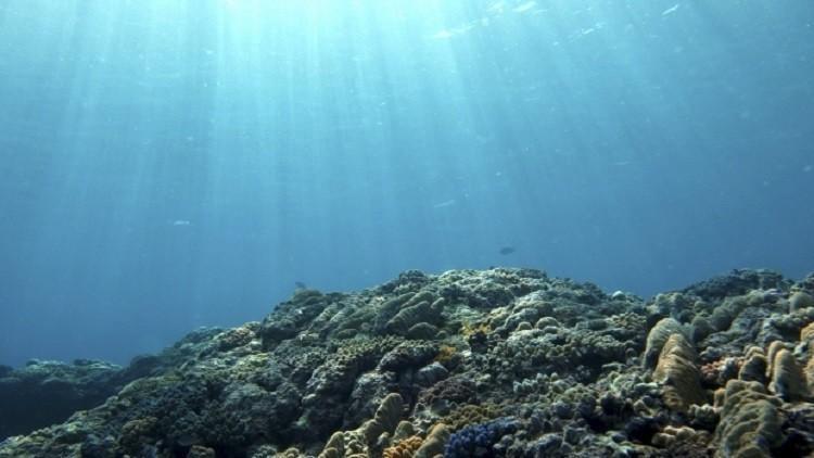 العلماء يلاحظون انخفاضا كارثيا في مستويات الأوكسيجين في المحيطات