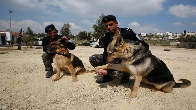 مقتل شرطي فلسطيني برصاص مطلوبين في مخيم بلاطة