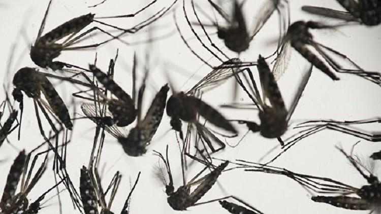 العلماء الصينيون والفرنسيون يُعدون مصلا ضد فيروس زيكا