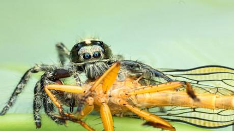 دراسة: العناكب تستهلك 800 مليون طن من الفرائس سنويا