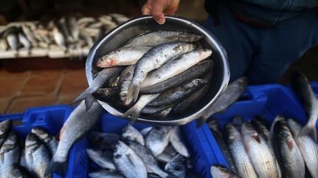 السودان يحظر استيراد منتجات مصرية