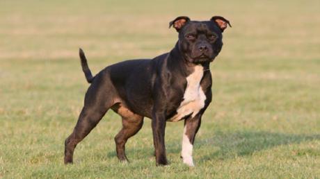 كلب يقتل صاحبه في أثناء تصوير فيلم وثائقي مع بي بي سي