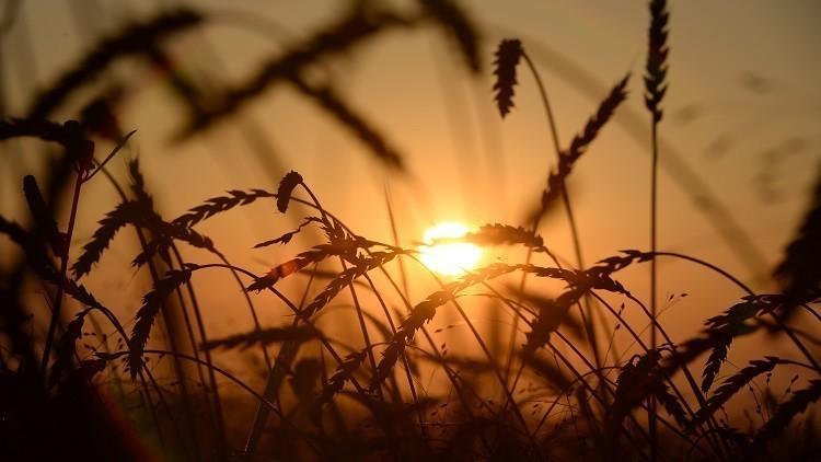 أنقرة تدعو موسكو لعقد لقاء لحل مشكلة الحبوب