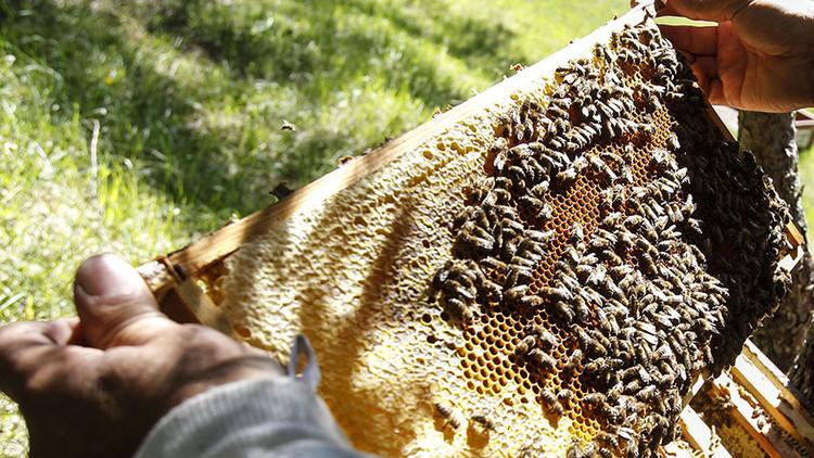 مكافأة لمن يبلغ عن معلومات حول سرقة مليون نحلة في النمسا