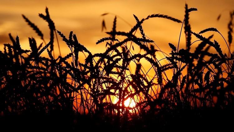 خطة روسية تركية لرفع القيود عن المنتجات الزراعية