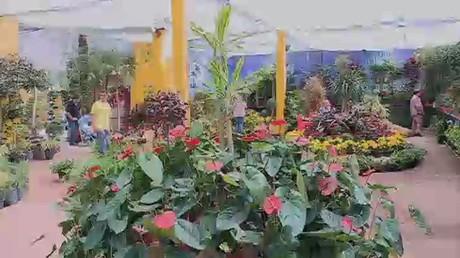 معرض الزهور في القاهرة.. فسحة للألوان