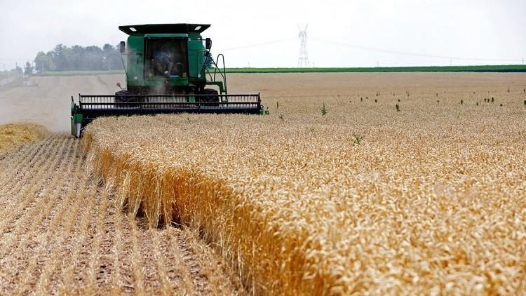 روسيا تزيد إمدادات الحبوب إلى تركيا