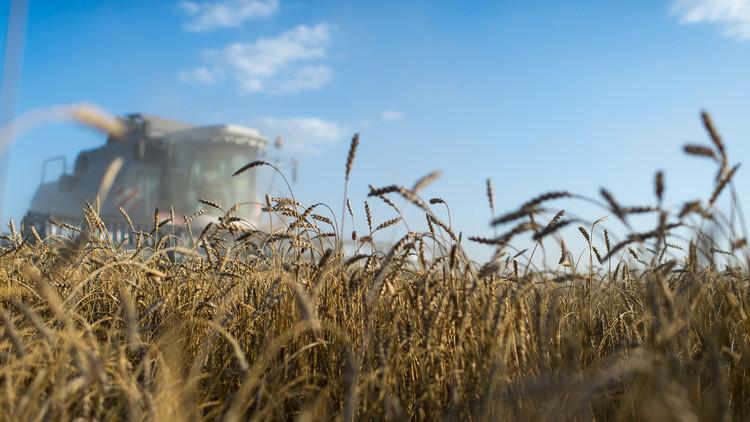 تركيا ترفع القيود عن القمح الروسي
