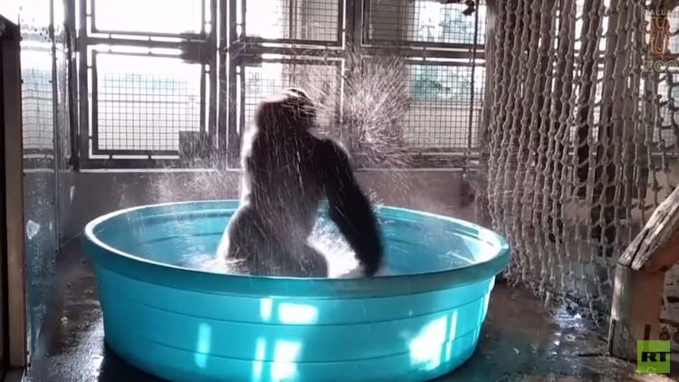 تعرف على الراقصة زولا في حديقة حيوانات دالاس
