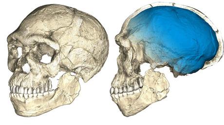 اكتشاف أقدم عظام بشرية على الإطلاق عمرها 300 ألف عام