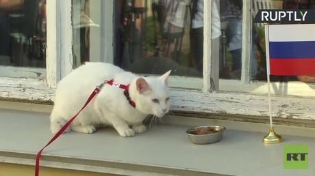 """القط """"أخيل"""" يتنبأ بالفائز من مواجهة روسيا ونيوزيلندا"""
