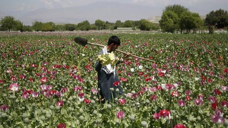 حقول الأفيون في أفغانستان