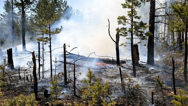 حرائق الغابات تلتهم 33 ألف هكتار شرقي روسيا