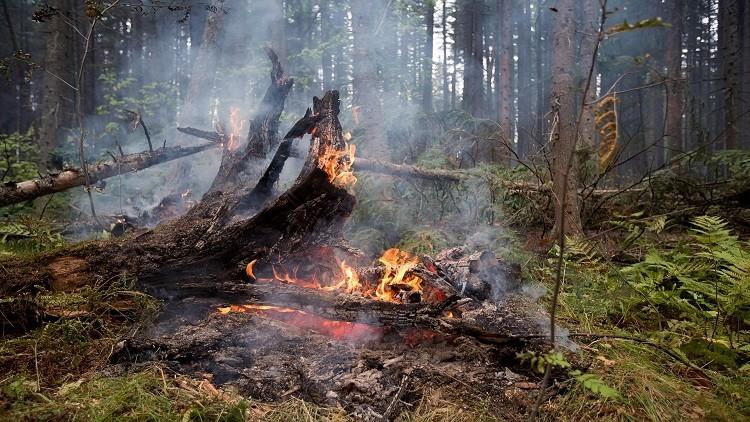 حرائق الغابات في شرق روسيا تلتهم مساحات واسعة