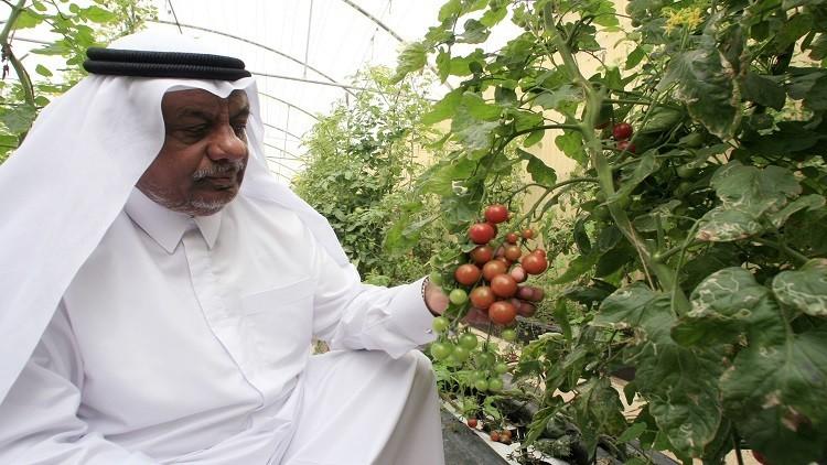 الأزمة الخليجية تفتح أعين الدوحة على أمنها الغذائي