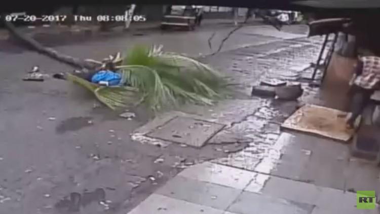 لحظة سقوط شجرة جوز الهند على امرأة في ضواحي مومباي