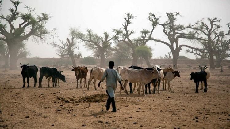 بسبب سرقة أغنام.. 55 قتيلا وجريحا في السودان