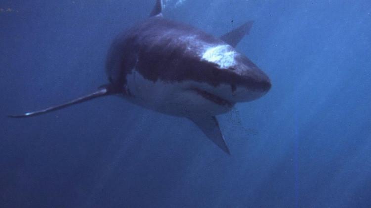 الخارجية الروسية تحذر رعاياها من القرش الأبيض في المياه المصرية