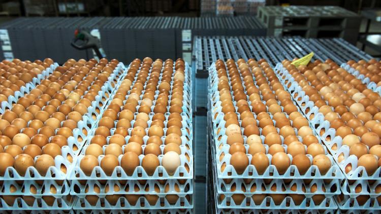 فضيحة البيض الملوث تتفاقم في أوروبا