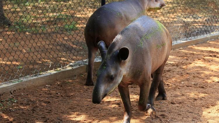 اللصوص يسرقون الحيوانات من حدائق فنزويلا لأكلها