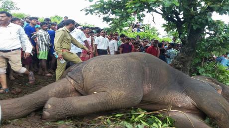 قتل فيل في الهند