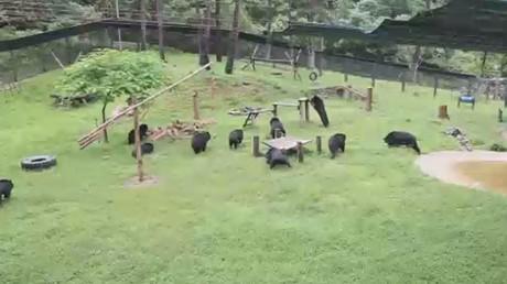 اتفاق لحظر استغلال الدبب في الطب بفيتنام