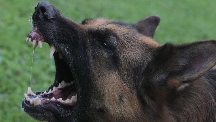 كلاب شرسة..  طريقة جديدة لعرقلة عمل المراقبين الدوليين في أوكرانيا
