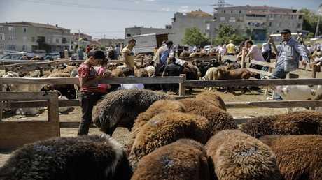 السعودية تخصص أكثر من 25 مليون رأس ماشية للعيد