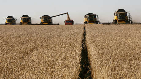 زراعة القمح في روسيا