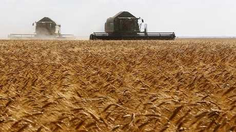 سوريا تشتري 3 ملايين طن من القمح الروسي