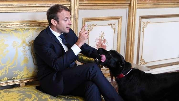 كلب الرئيس الفرنسي يقطع أحد اجتماعات ماكرون ويقضي حاجته أمام الضيوف (فيديو)