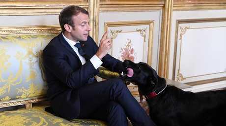 الرئيس الفرنسي وكلبه نيمو