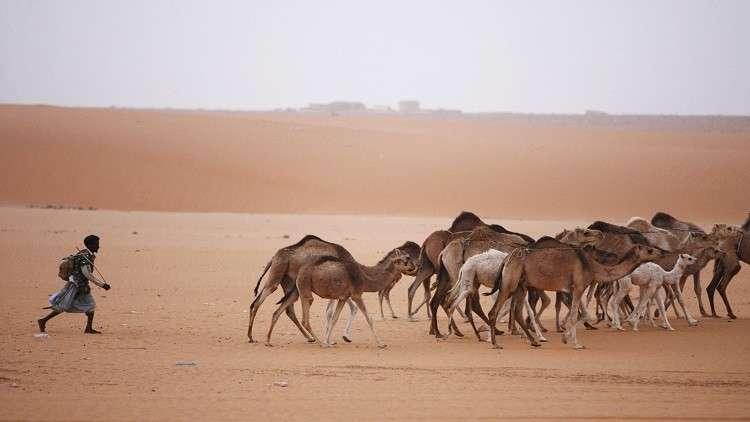 موريتانيا تسعى لجذب الاستثمارات إلى قطاع الثروة الحيوانية