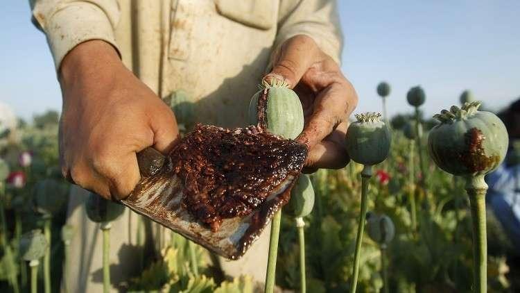 إنتاج الأفيون في أفغانستان يبلغ مستويات قياسية