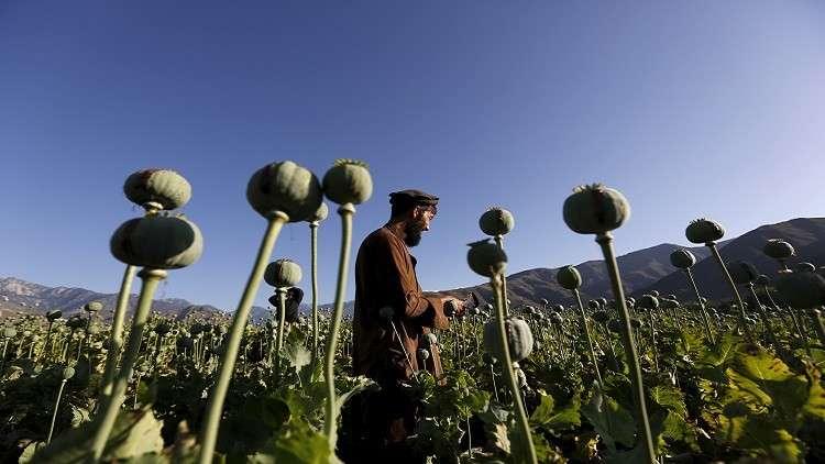 إنتاج الأفيون في أفغانستان يرتفع إلى مستوى غير مسبوق