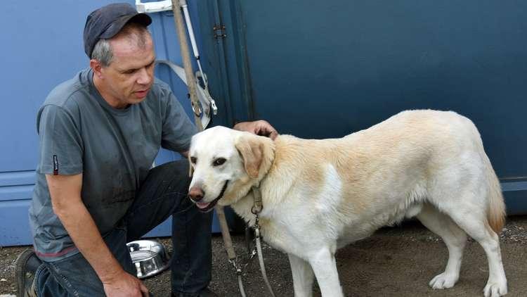 سر الصداقة بين الكلاب والبشر