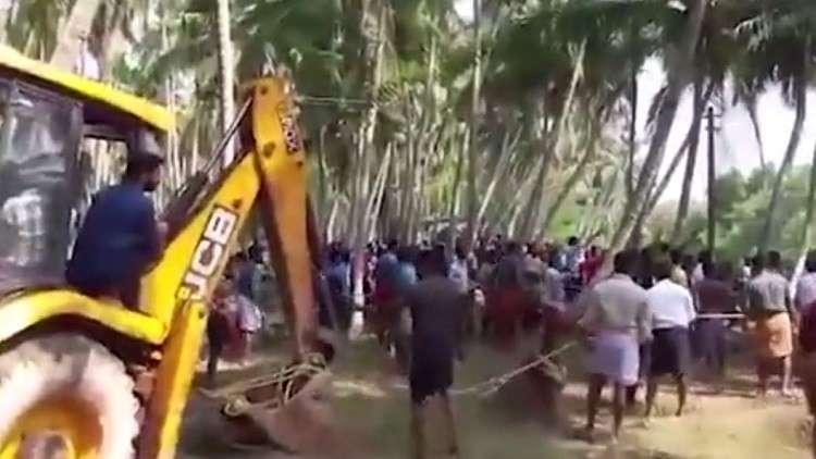سكان قرية هندية ينقذون فيلا عالقا في الطين