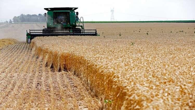 انخفاض أسعار القمح الأمريكي في مصر