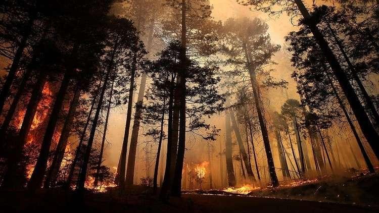 تغير المناخ يوقف نمو الغابات بعد الحرائق