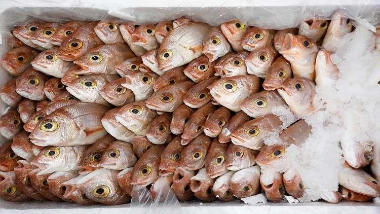 السيسي يفتتح قريبا مشروعا جديدا للاستزراع السمكي