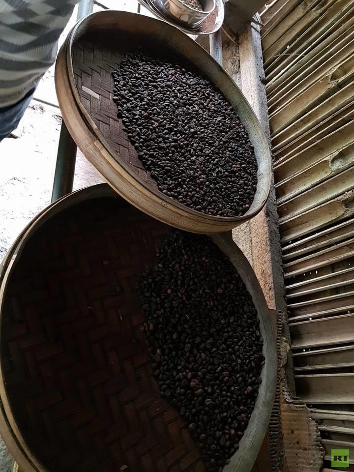 بالصور.. تعرف على القهوة الأغلى ثمنا المستخرجة من براز حيوان الزباد!