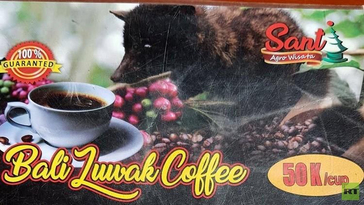 بالصور تعرف على القهوة الأغلى ثمنا المستخرجة من براز حيوان الزباد Rt Arabic