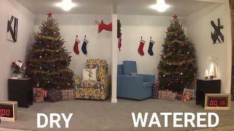تجربة تظهر خطورة استخدام الأشجار الجافة للاحتفال بعيد الميلاد